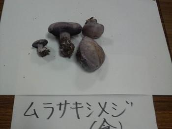 murasakishimeji.jpg